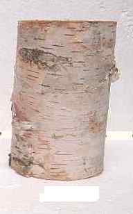 "BIRCH PILLAR 5"" TALL - MEDIUM"