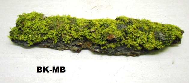 PINE BARK, WITH CHAR MOSS