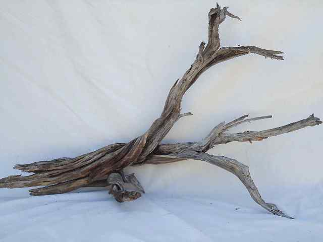 "GHOSTWOOD, NATURAL 48"", BRANCHY"