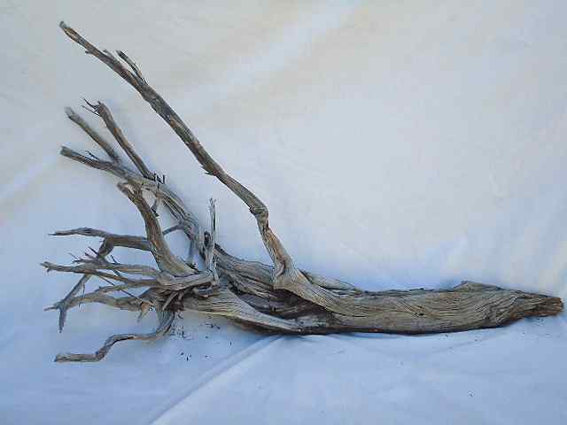 "GHOSTWOOD NATURAL 60"" BRANCHY"