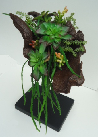 Mounted Mohave Wood with Succulents