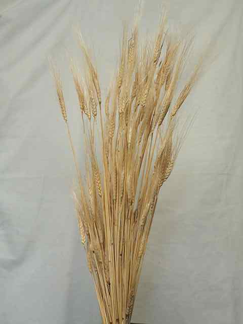 WHEAT-NATURAL