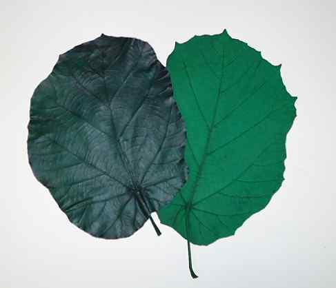 FIG LEAF (DARK GREEN)
