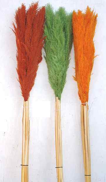 PAMPAS PLUMES- COLORED